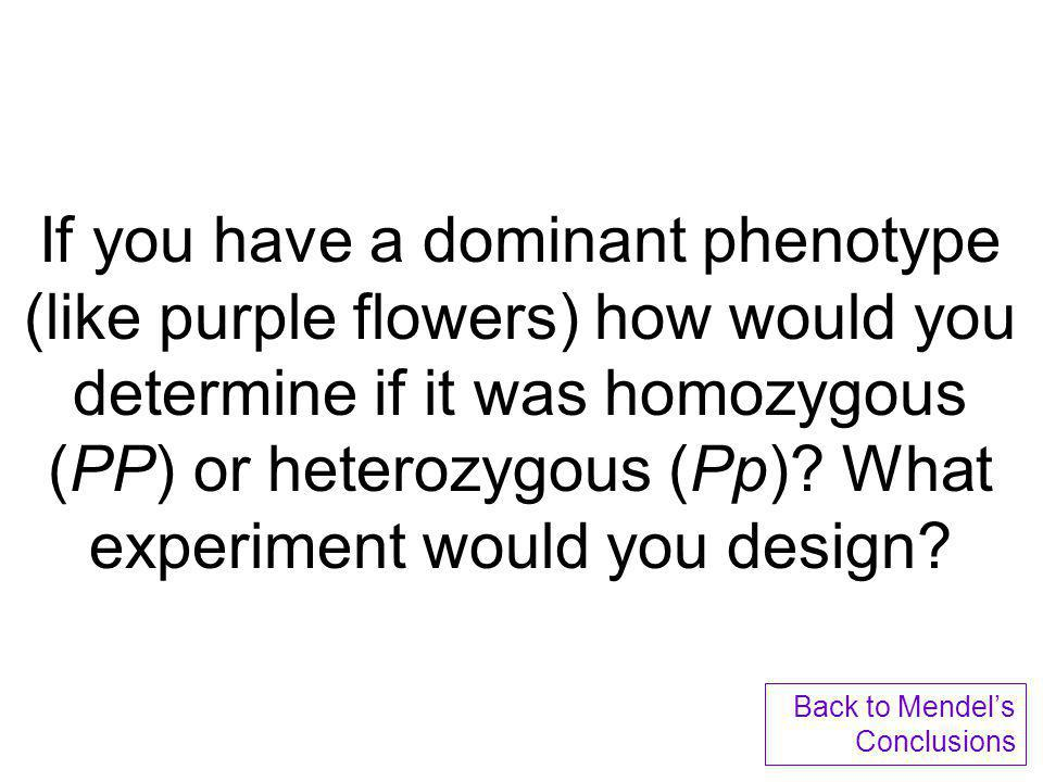 Dominate alleles mask recessive ones Dominant phenotype, unknown genotype: PP or Pp? Recessive phenotype, known genotype: pp If PP, then all offspring