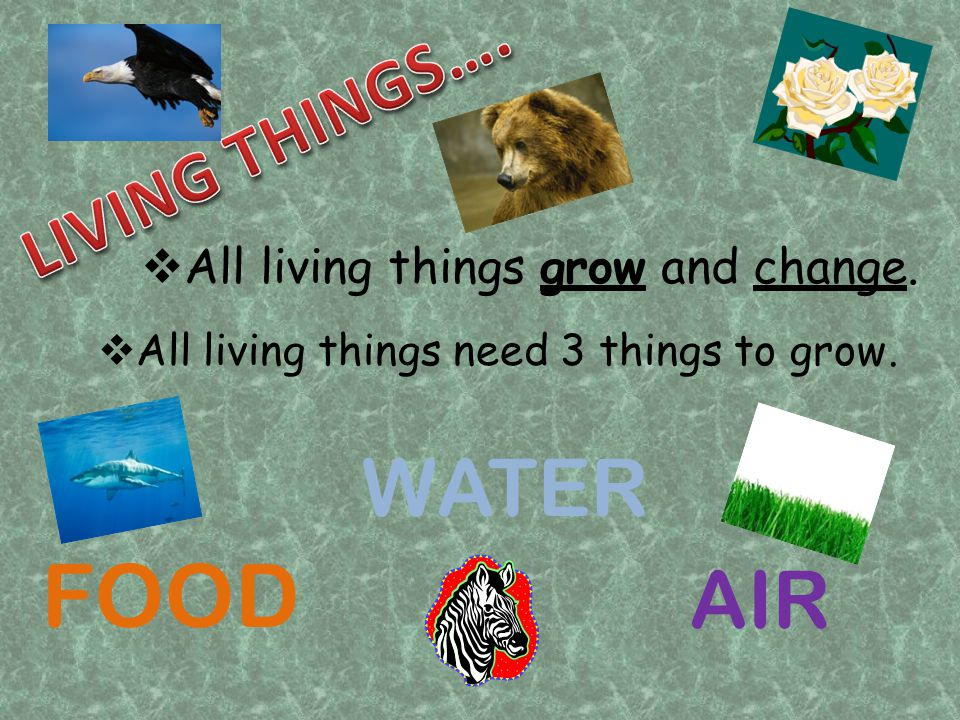 All living things grow and change. All living things need 3 things to grow. FOOD WATER AIR