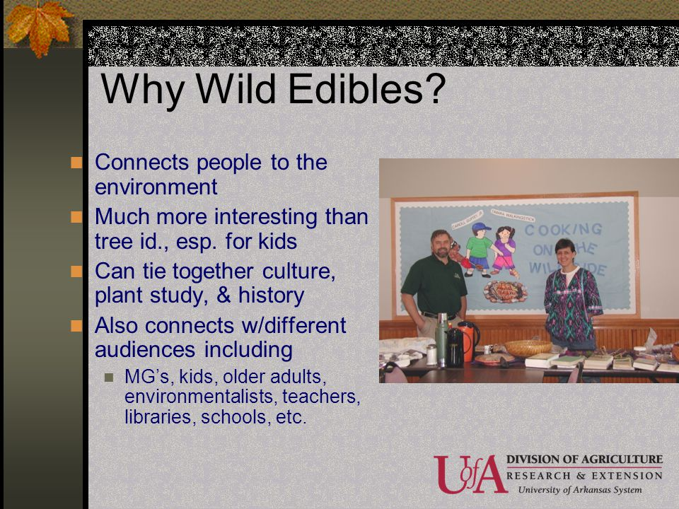 Why Wild Edibles? Connects people to the environment Much more interesting than tree id., esp. for kids Can tie together culture, plant study, & histo