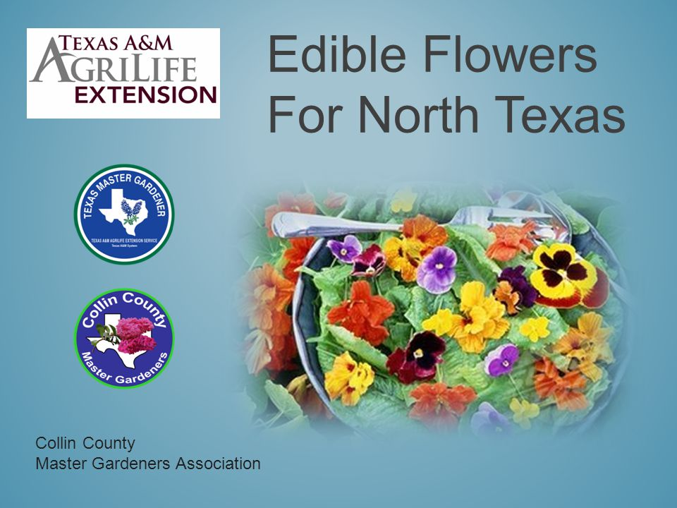 The MASTER GARDENERS PROGRAM is a volunteer organization affiliated with Texas A&M AgriLife Extension Service Master Gardeners: Receive training and continuing education in horticulture Share their expertise through a wide variety of projects Promote research-based horticultural practices For horticulture information and services 972-548-4219 972-548-4232 http://ccmgatx.org mgcollin@ag.tamu.edu Extension programs serve people of all ages regardless of socioeconomic level, race, color, sex, religion, disability of national origin.