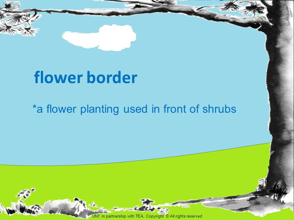 flower border *a flower planting used in front of shrubs 8 UNT in partnership with TEA, Copyright © All rights reserved