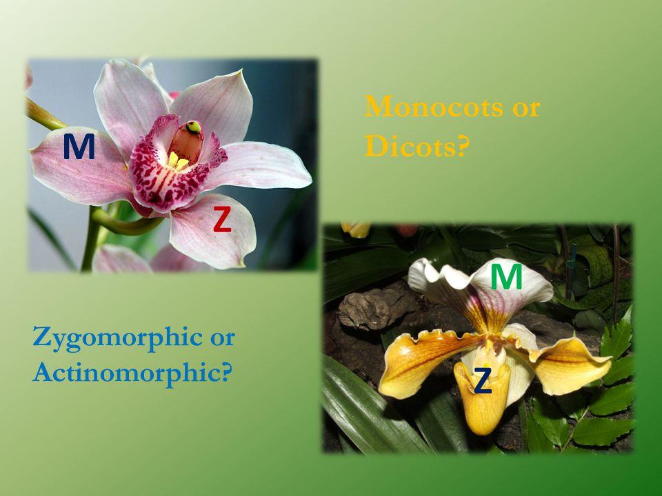 Monocots or Dicots? Zygomorphic or Actinomorphic? M Z M Z