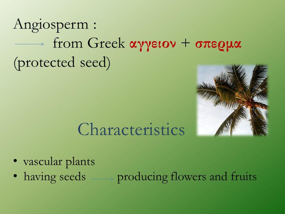 Angiosperm : from Greek αγγειον + σπερμα (protected seed) Characteristics vascular plants having seeds producing flowers and fruits