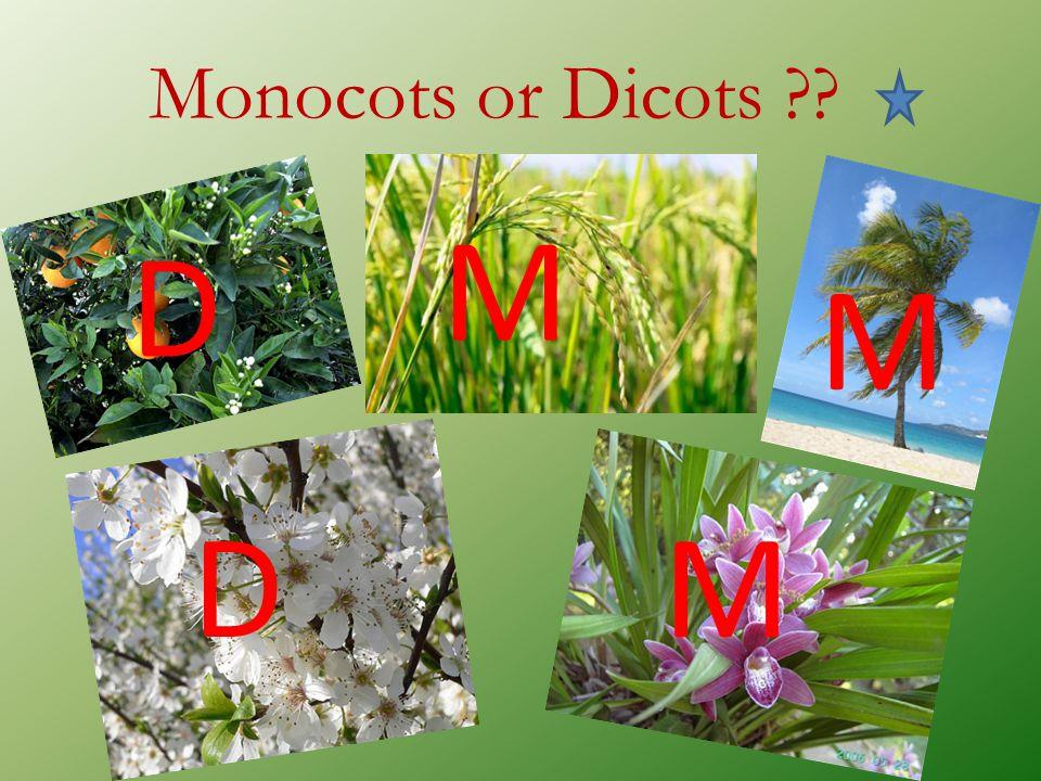 Monocots or Dicots ?? D M M DM