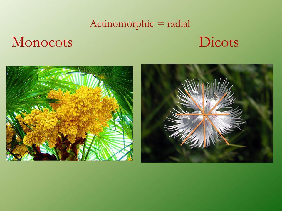 Actinomorphic = radial MonocotsDicots