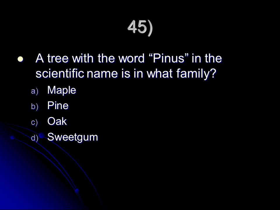 45) A tree with the word Pinus in the scientific name is in what family? A tree with the word Pinus in the scientific name is in what family? a) Maple