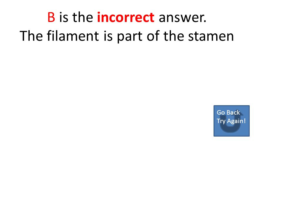 A is the Incorrect answer the stamen is a male flower part Go back Try Again!