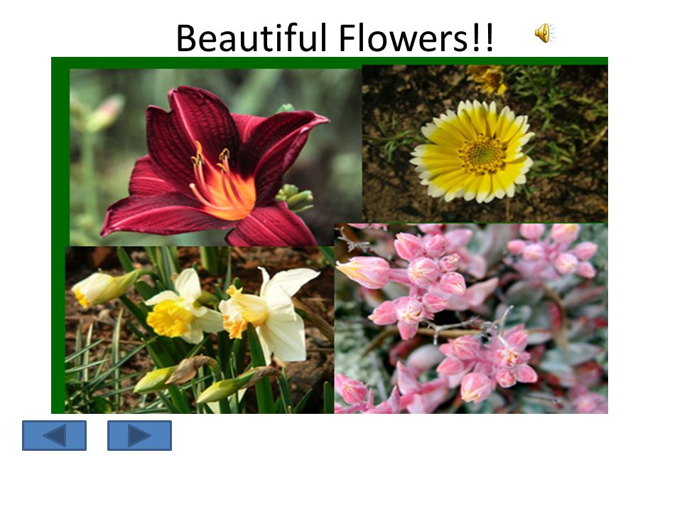 Learning the Parts of a Flower Self Instructional Package next
