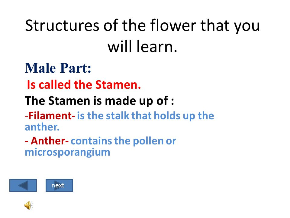 The answer C is correct. The Style is what the pollen tube grows through so the sperm can reach the egg. (ovule) next