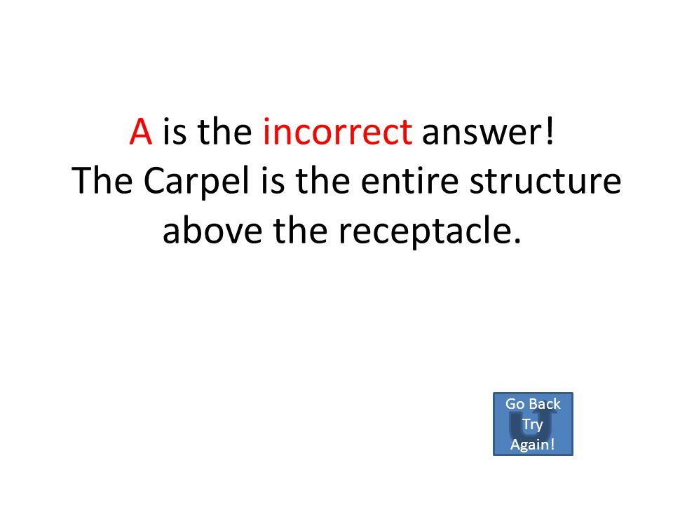 What part is the red arrow pointing at? A.CarpelCarpel B.ReceptacleReceptacle C.OvaryOvary