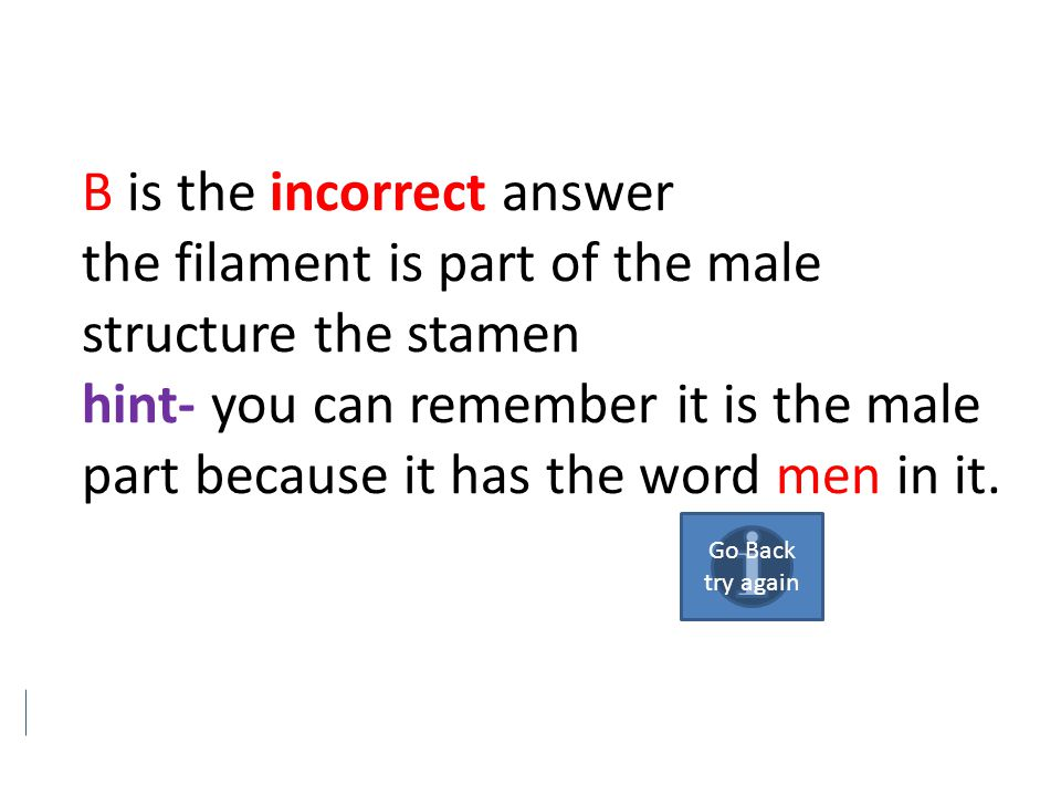 B is the incorrect answer the filament is part of the male structure the stamen hint- you can remember it is the male part because it has the word men in it.