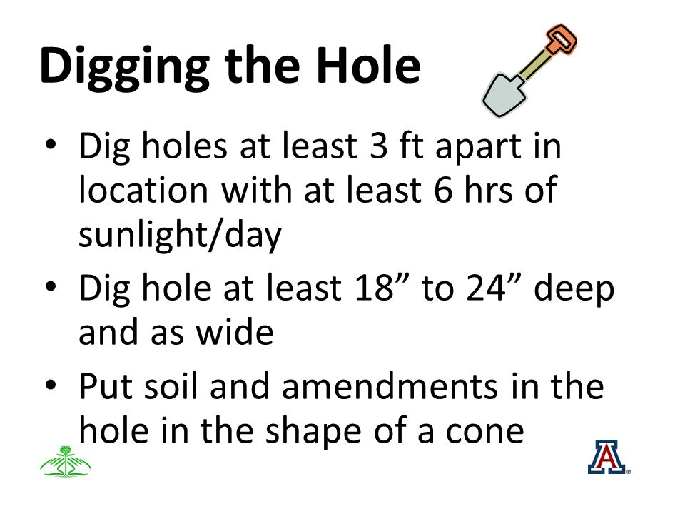 Digging the Hole Dig holes at least 3 ft apart in location with at least 6 hrs of sunlight/day Dig hole at least 18 to 24 deep and as wide Put soil an