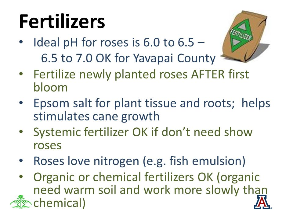 Fertilizers Ideal pH for roses is 6.0 to 6.5 – 6.5 to 7.0 OK for Yavapai County Fertilize newly planted roses AFTER first bloom Epsom salt for plant t