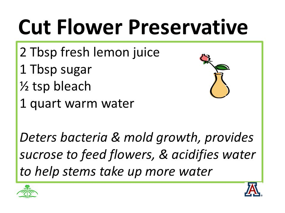 Cut Flower Preservative 2 Tbsp fresh lemon juice 1 Tbsp sugar ½ tsp bleach 1 quart warm water Deters bacteria & mold growth, provides sucrose to feed