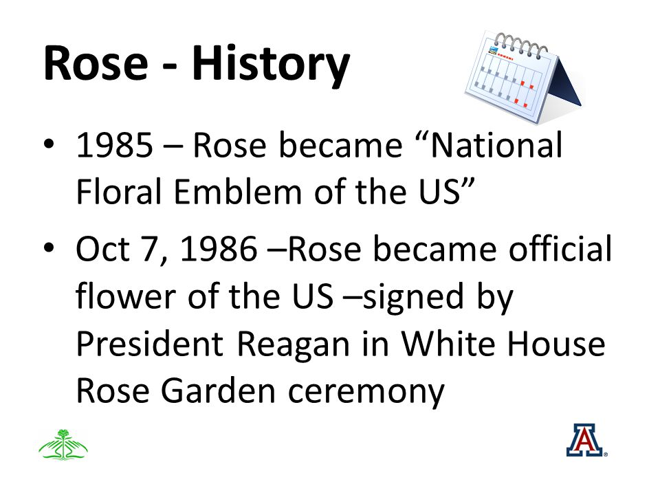 Rose - History 1985 – Rose became National Floral Emblem of the US Oct 7, 1986 –Rose became official flower of the US –signed by President Reagan in White House Rose Garden ceremony