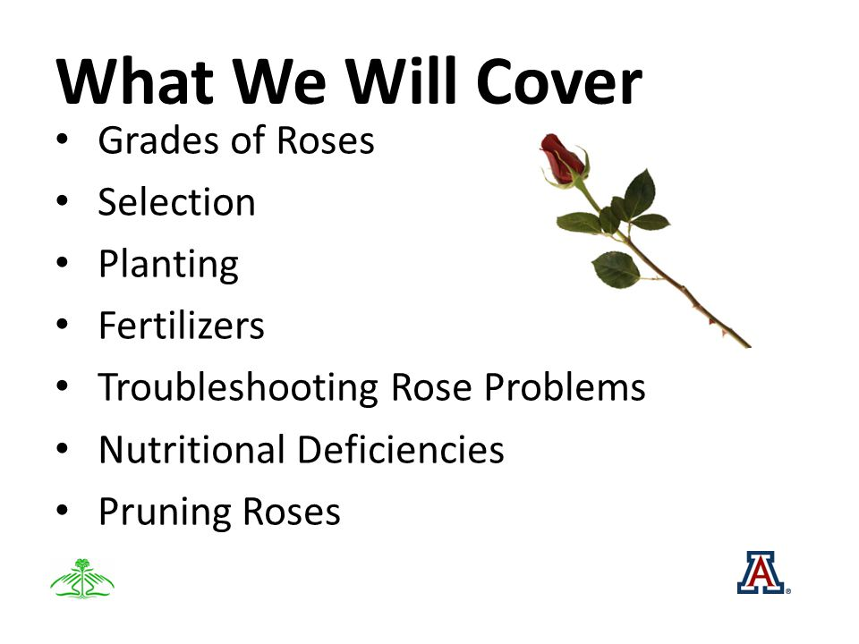 What We Will Cover Grades of Roses Selection Planting Fertilizers Troubleshooting Rose Problems Nutritional Deficiencies Pruning Roses