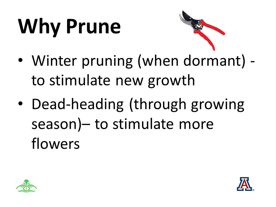 Why Prune Winter pruning (when dormant) - to stimulate new growth Dead-heading (through growing season)– to stimulate more flowers