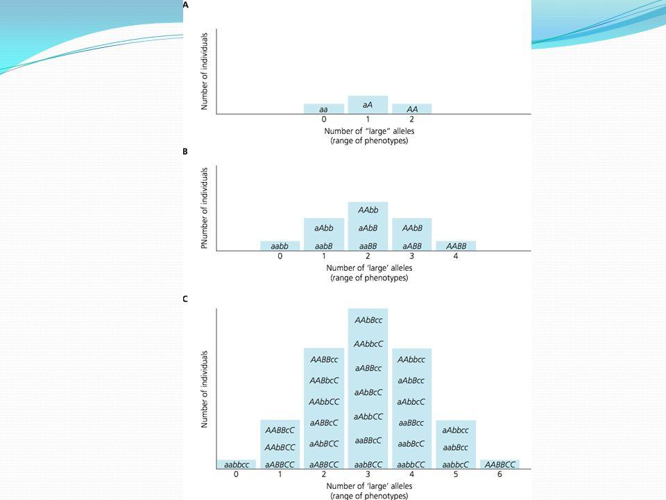 Measuring Heritable Variation Heritability = Vg/Vp Heritability = Vg/Vg+Ve This is broad-sense heritability (H 2 ).