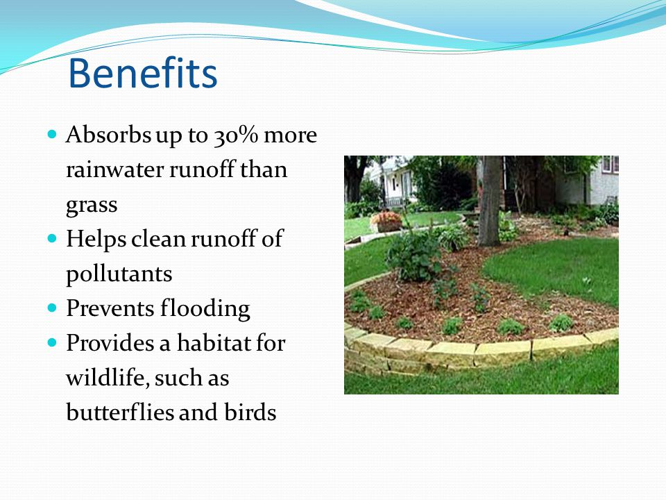 Benefits Absorbs up to 30% more rainwater runoff than grass Helps clean runoff of pollutants Prevents flooding Provides a habitat for wildlife, such a