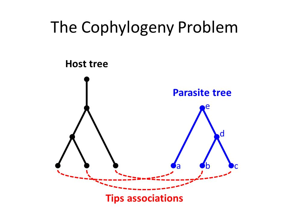 The Cophylogeny Problem Host tree Tips associations abc Parasite tree d e