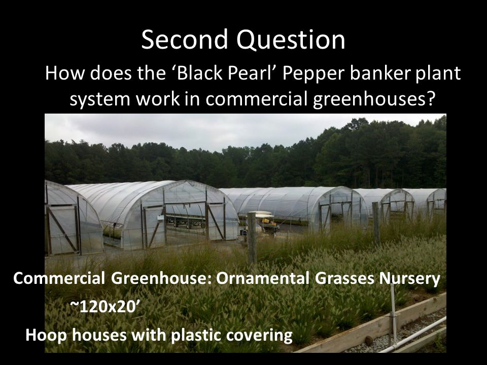 Second Question How does the Black Pearl Pepper banker plant system work in commercial greenhouses.