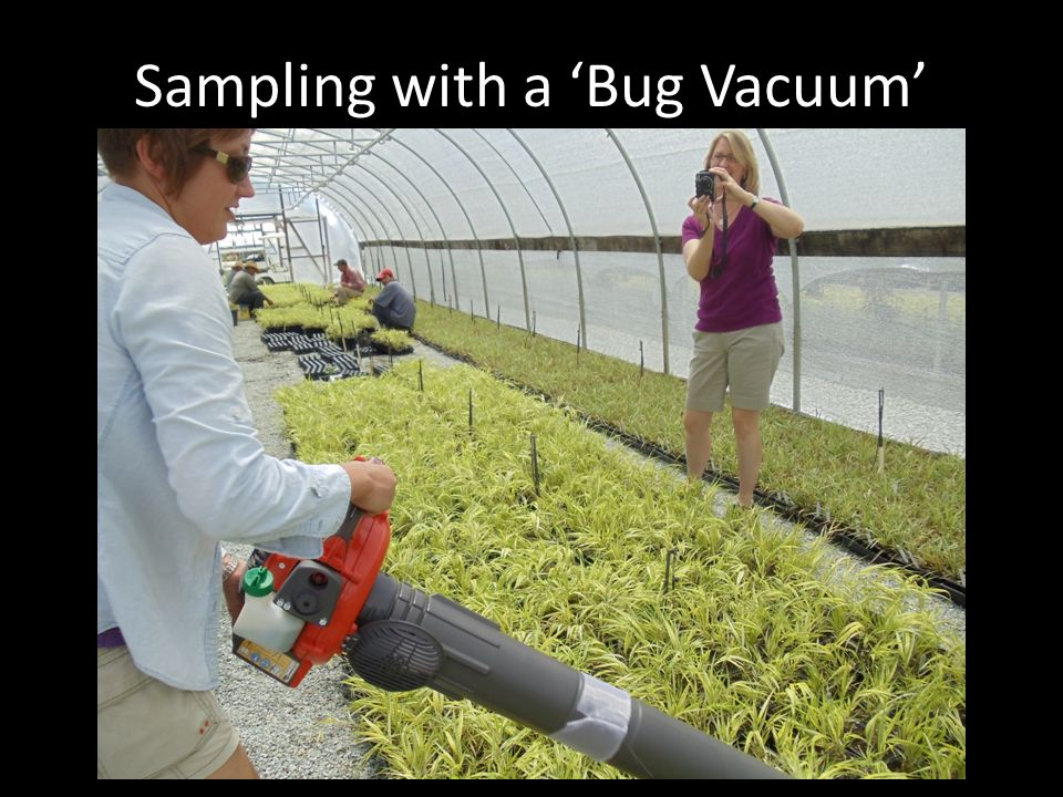 Sampling with a Bug Vacuum