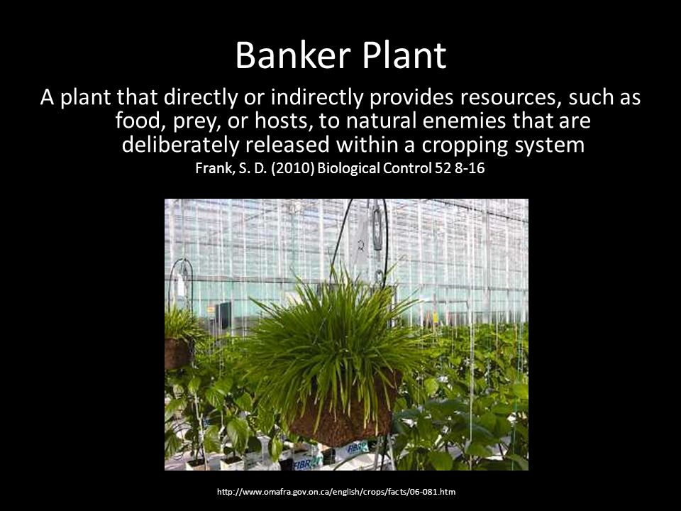 The Future of Banker Plants