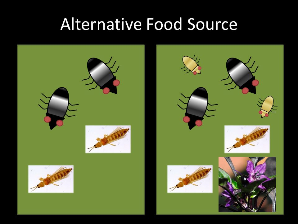 Alternative Food Source
