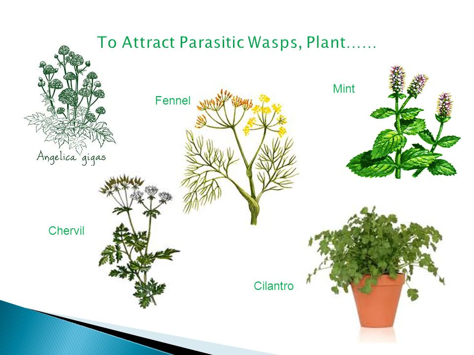 Some herbs and flowers naturally attract pollinating insects.