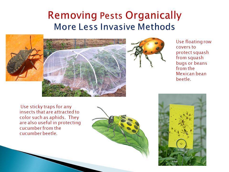 Plant in warm soil & water often.Work in plenty of rich compost & mulch well.