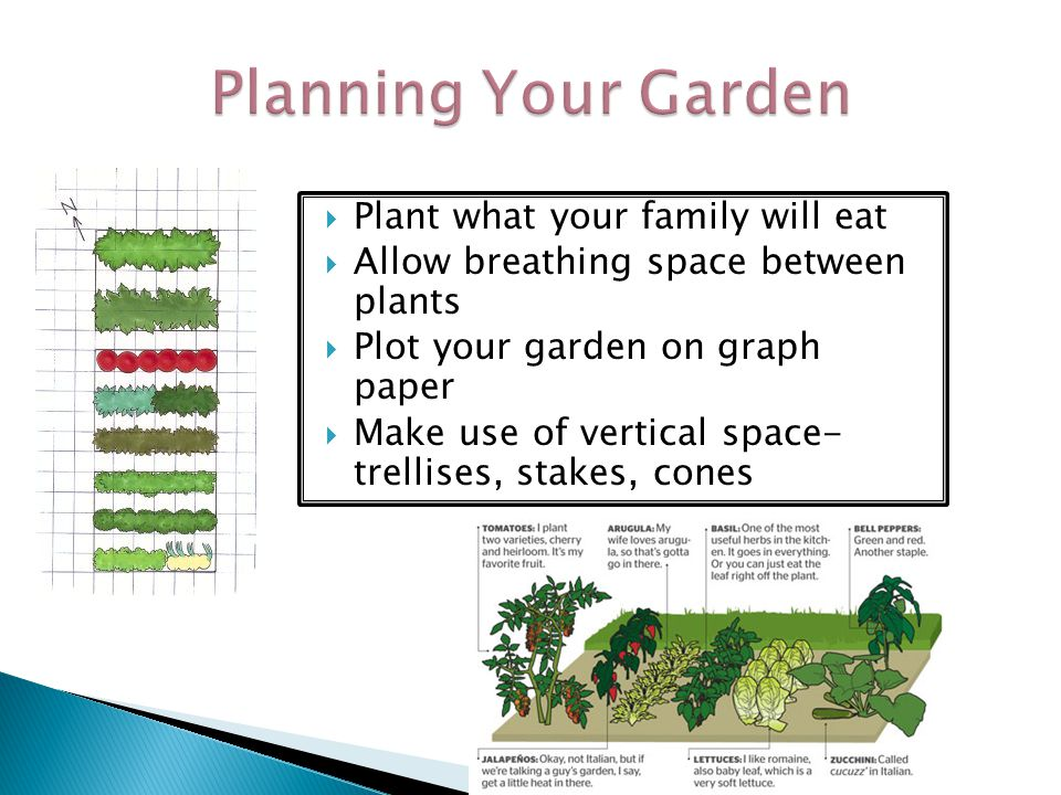Look for plants with healthy roots and leaves Plant only certified seed Buy plants from reputable growers