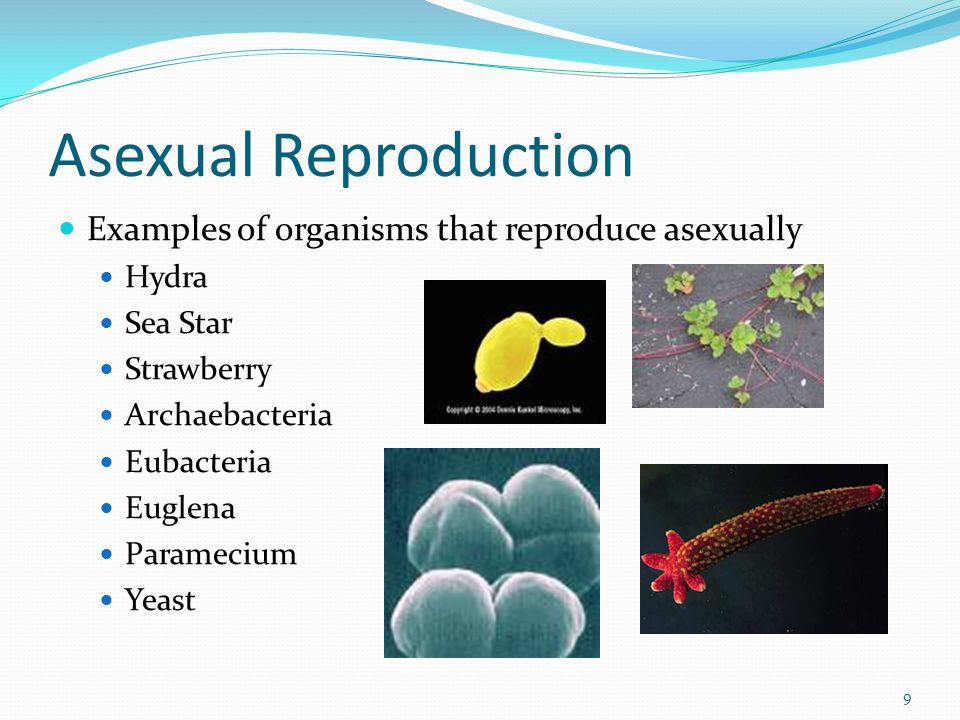 Sexual Reproduction Requires two parents that each share ½ of the genetic information.