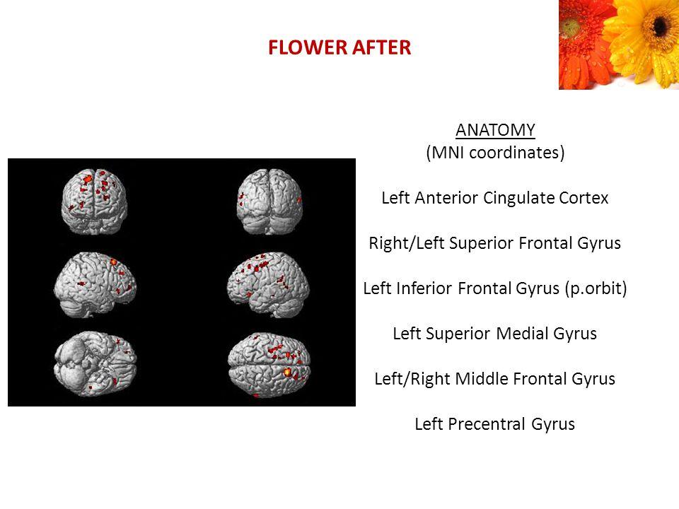 FLOWER AFTER ANATOMY (MNI coordinates) Left Anterior Cingulate Cortex Right/Left Superior Frontal Gyrus Left Inferior Frontal Gyrus (p.orbit) Left Superior Medial Gyrus Left/Right Middle Frontal Gyrus Left Precentral Gyrus