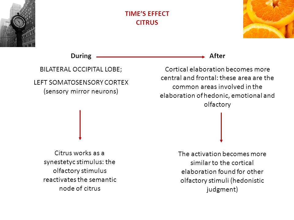 TIMES EFFECT CITRUS During BILATERAL OCCIPITAL LOBE; LEFT SOMATOSENSORY CORTEX (sensory mirror neurons) Citrus works as a synestetyc stimulus: the olfactory stimulus reactivates the semantic node of citrus After Cortical elaboration becomes more central and frontal: these area are the common areas involved in the elaboration of hedonic, emotional and olfactory The activation becomes more similar to the cortical elaboration found for other olfactory stimuli (hedonistic judgment)