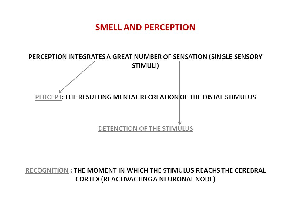 SMELL AND PERCEPTION PERCEPTION INTEGRATES A GREAT NUMBER OF SENSATION (SINGLE SENSORY STIMULI) PERCEPT: THE RESULTING MENTAL RECREATION OF THE DISTAL STIMULUS DETENCTION OF THE STIMULUS RECOGNITION : THE MOMENT IN WHICH THE STIMULUS REACHS THE CEREBRAL CORTEX (REACTIVACTING A NEURONAL NODE)