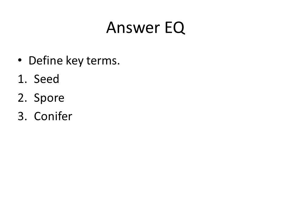 Answer EQ Define key terms. 1.Seed 2.Spore 3.Conifer