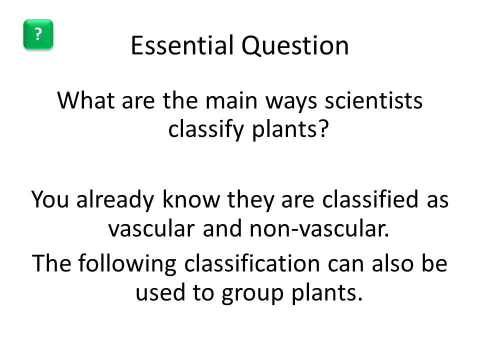 Essential Question What are the main ways scientists classify plants? You already know they are classified as vascular and non-vascular. The following