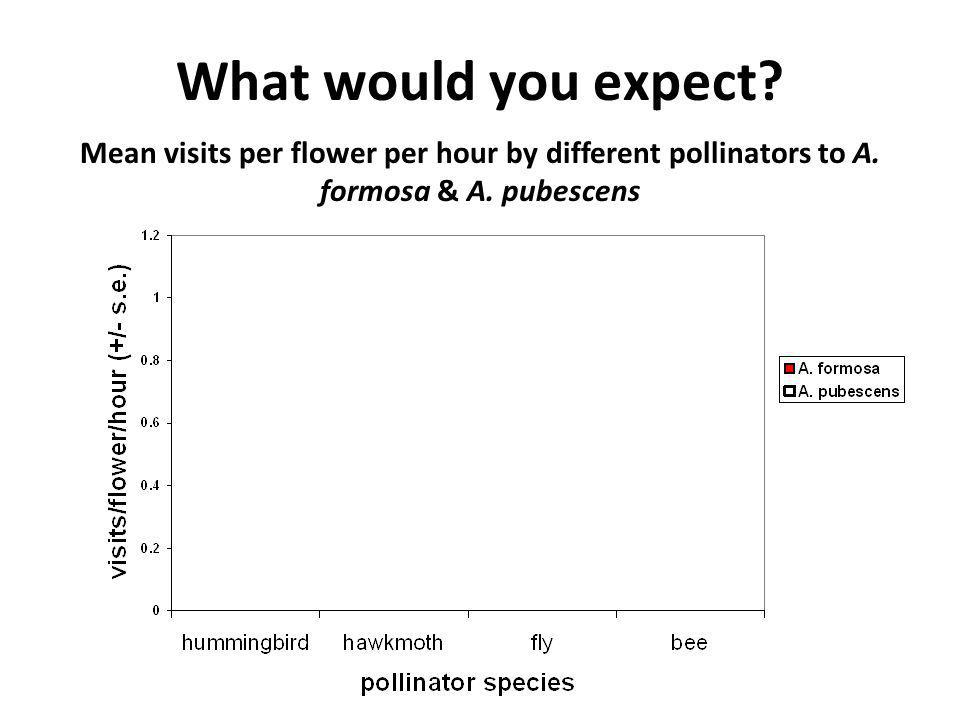 What would you expect? Mean visits per flower per hour by different pollinators to A. formosa & A. pubescens