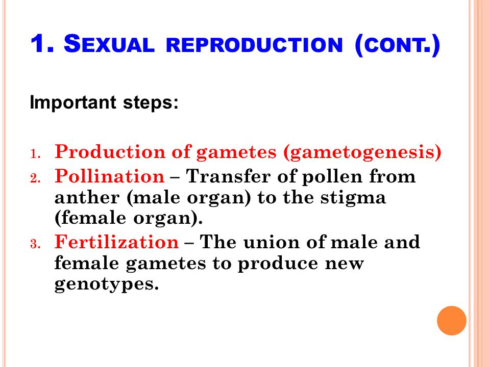 A POMIXIS ( CONT.) Apogamy – Embryo formation from synergids or antipodals