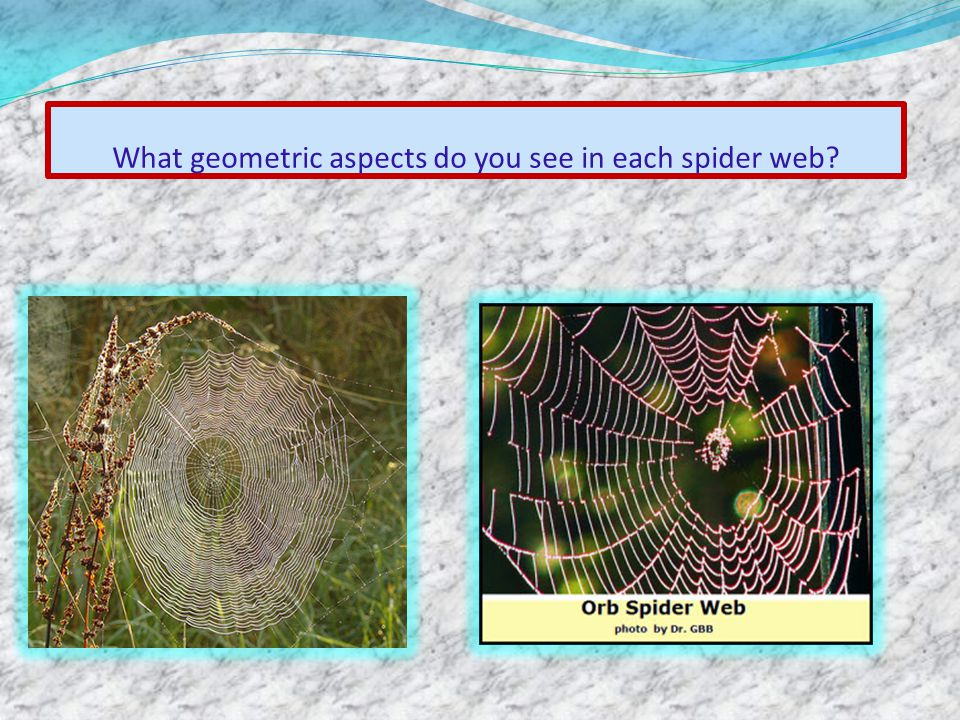 What geometric aspects do you see in each spider web?