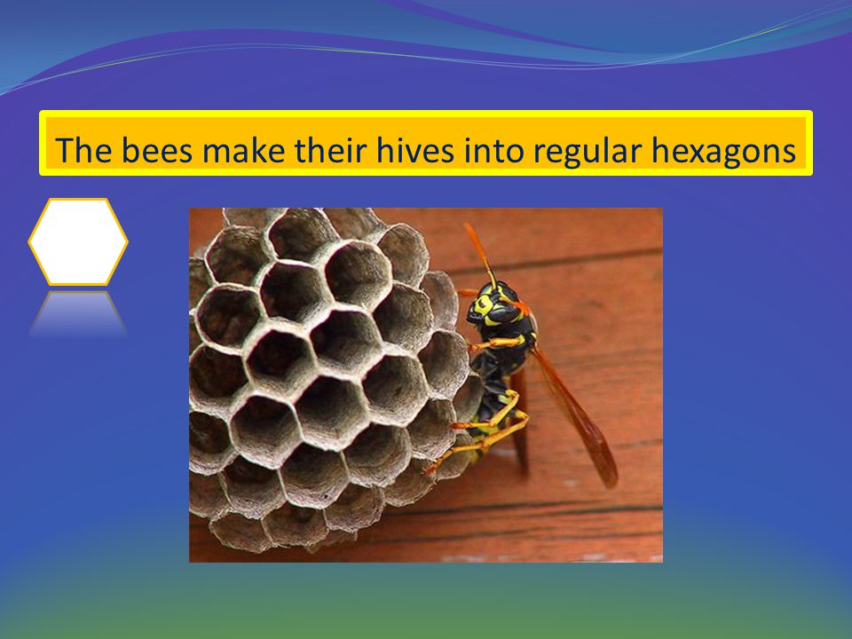 The bees make their hives into regular hexagons