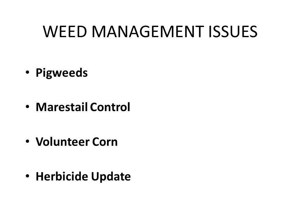 WEED MANAGEMENT ISSUES Pigweeds Marestail Control Volunteer Corn Herbicide Update