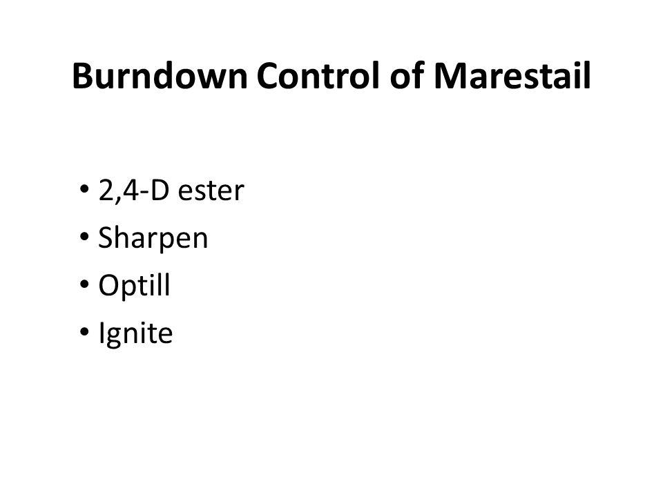Burndown Control of Marestail 2,4-D ester Sharpen Optill Ignite