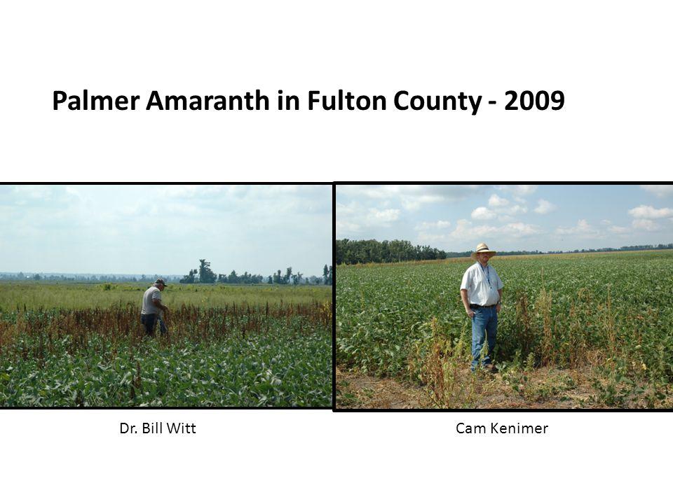 Palmer Amaranth in Fulton County - 2009 Dr. Bill WittCam Kenimer