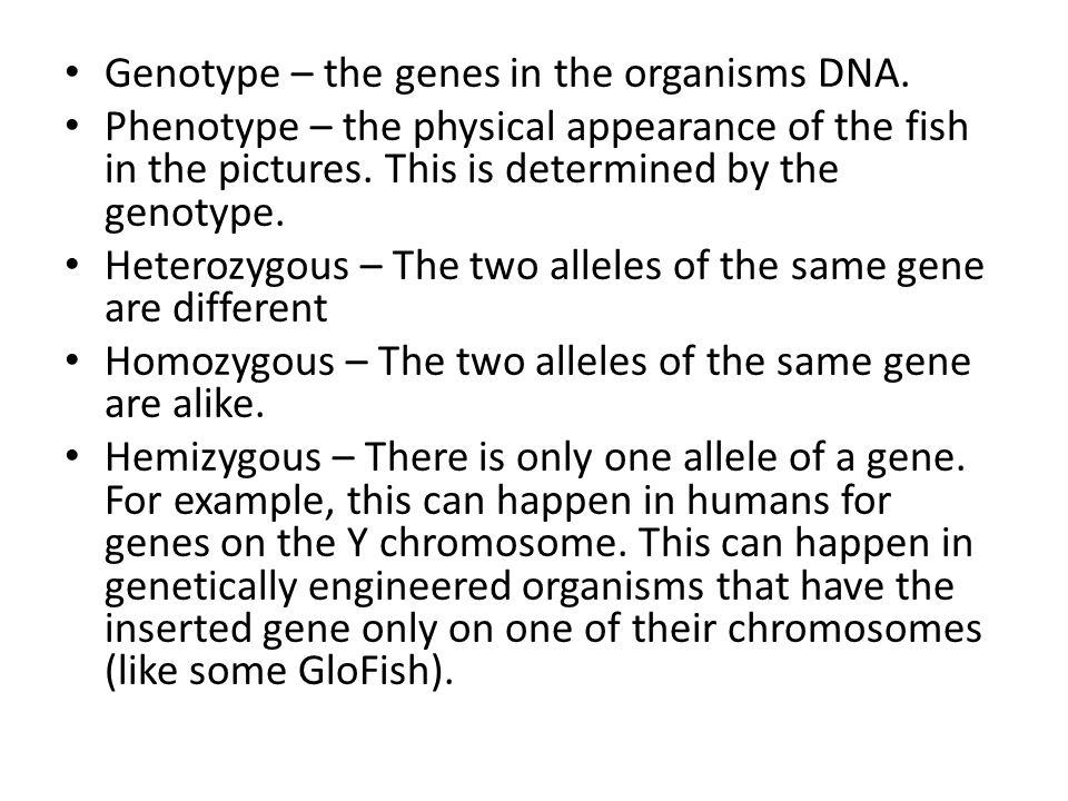 Genotype – the genes in the organisms DNA.