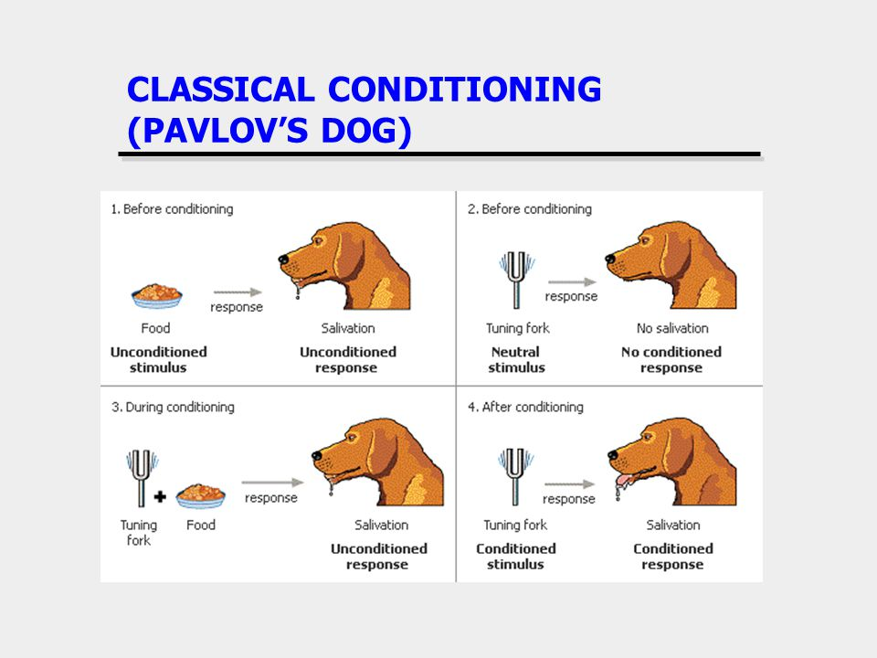 CLASSICAL CONDITIONING (PAVLOVS DOG)