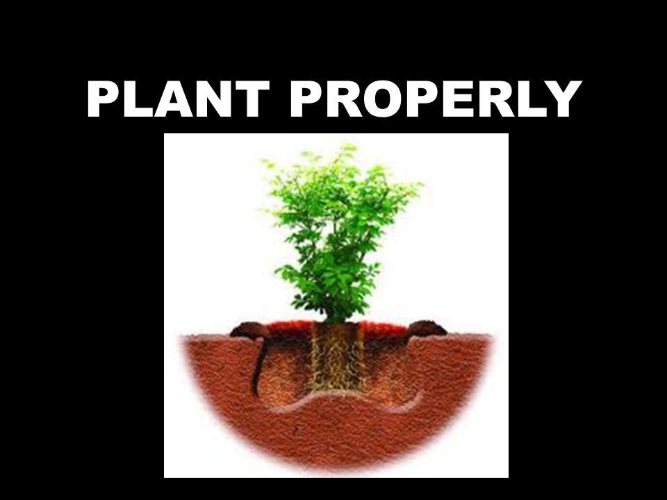 PLANT PROPERLY
