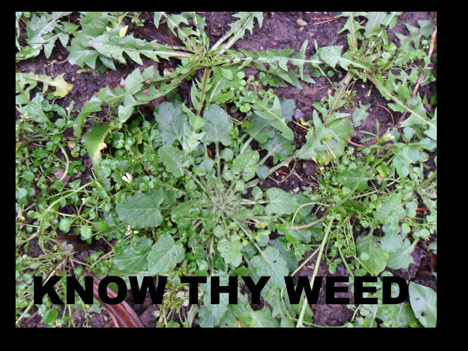 KNOW THY WEED