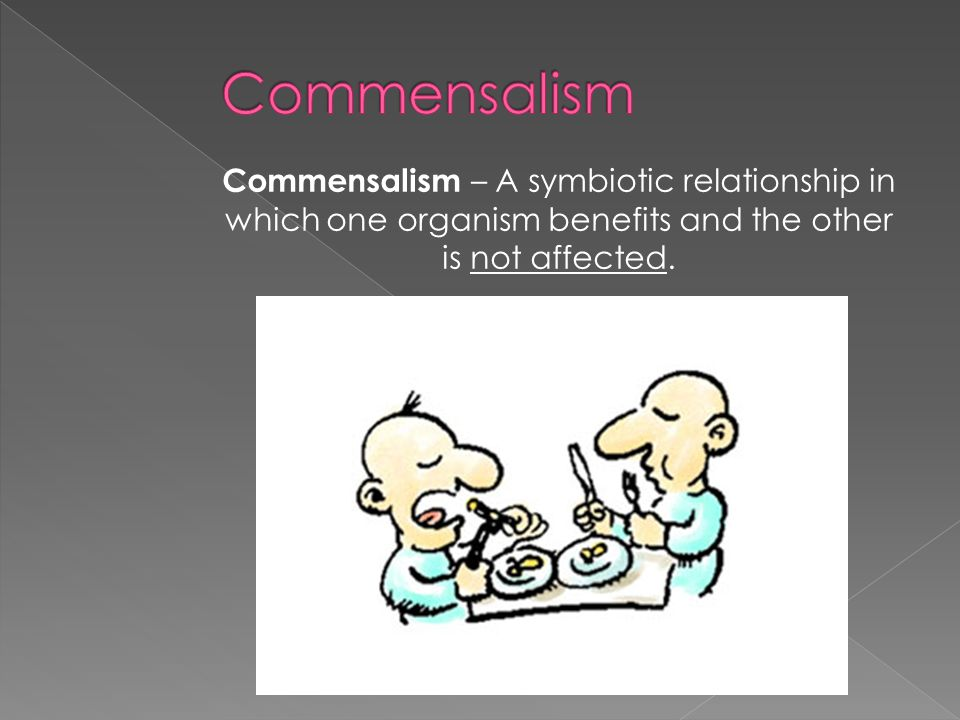 Commensalism – A symbiotic relationship in which one organism benefits and the other is not affected.