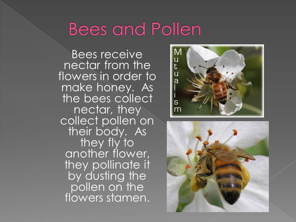 Bees receive nectar from the flowers in order to make honey. As the bees collect nectar, they collect pollen on their body. As they fly to another flo